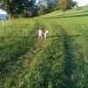 Boncuk beim Spaziergang