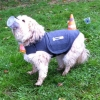 Boncuk in der TbB-Hunde-Woche