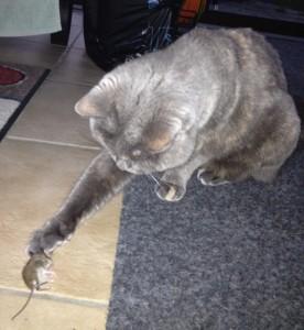 Die erste gefangene Maus! Juni 2012