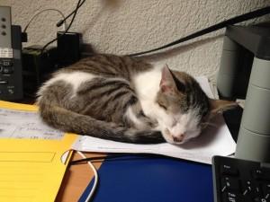 Finn auf meinem Schreibtisch