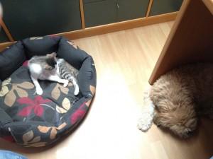 Finn & Boncok im Büro