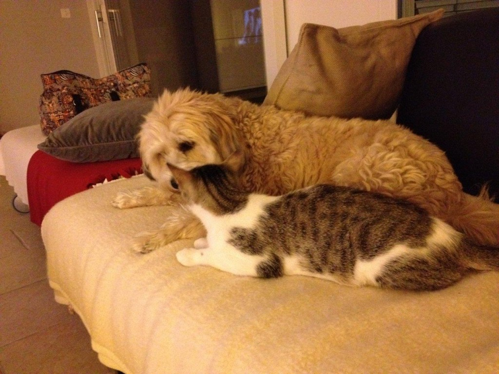Boncuk & Finn auf dem Sofa