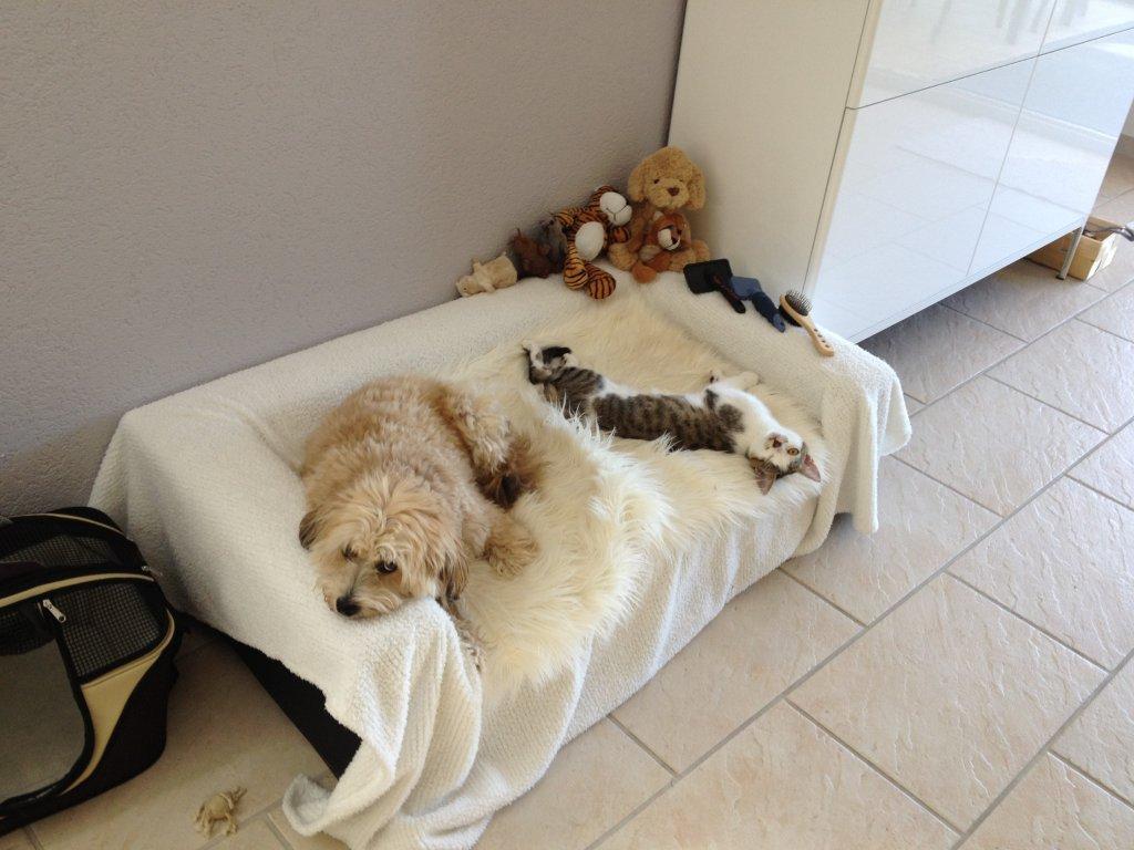 Boncuk & Finn auf dem Hundesofa