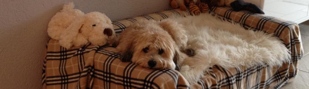 Boncuk auf ihrem Hunde-Sofa