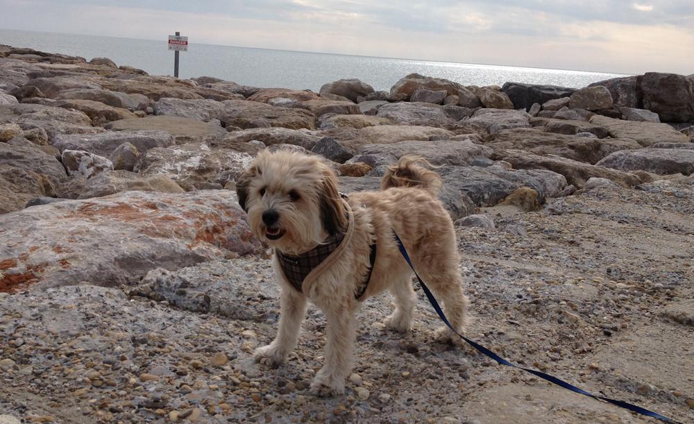 Boncuk am Strand