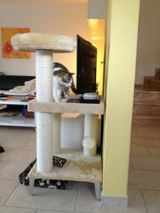 Finn's Fressplatz auf dem Katzenbaum