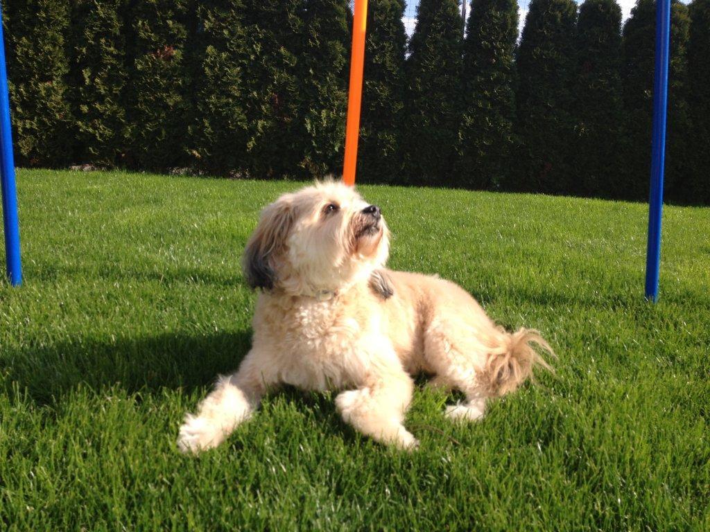 Boncuk nach dem TbB-Hundesalon