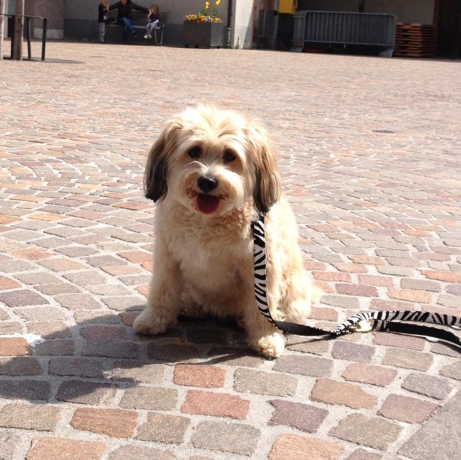 Boncuk in der Altstadt von Rheinfelden