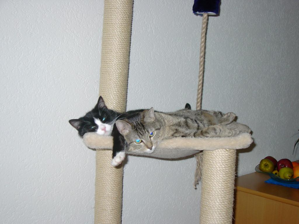 Lilo & Besca