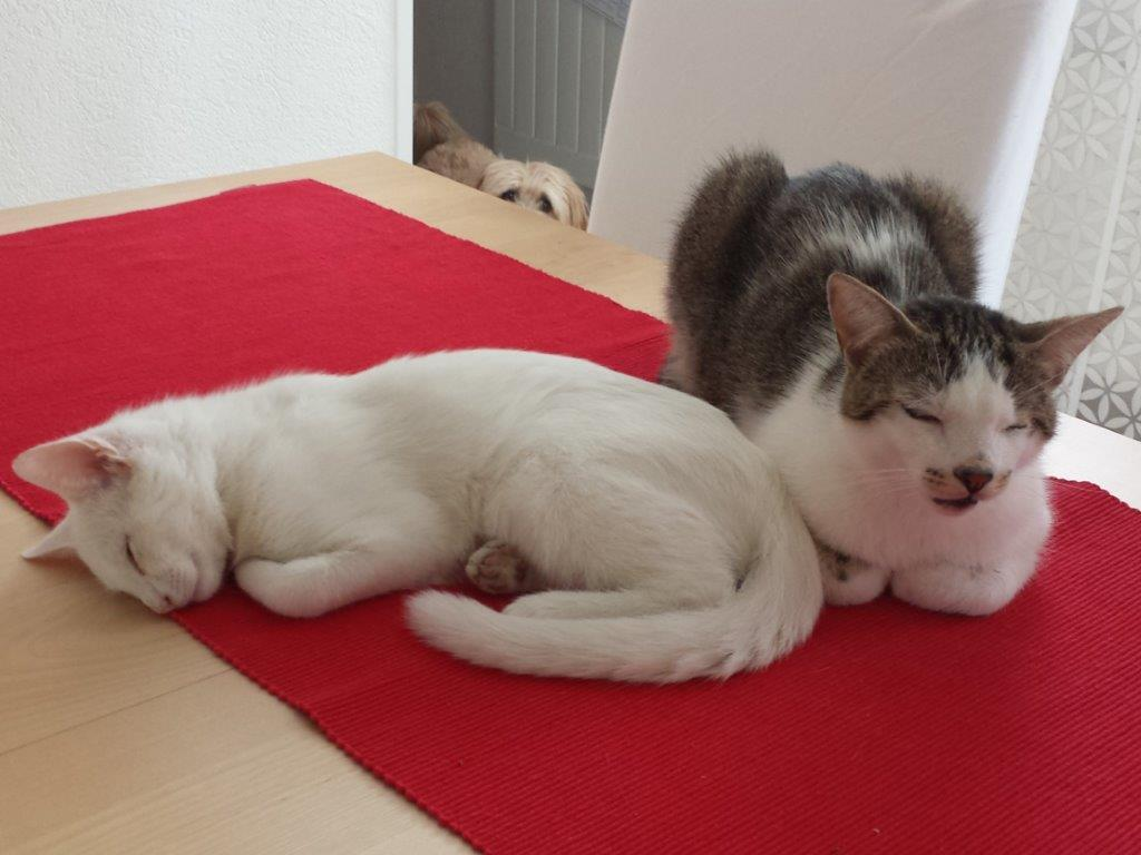 Prince & Finn im Wohnzimmer