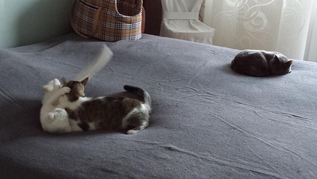Finn & Prince beim Spielen, Mary schaut relaxed zu :-)