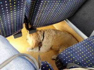 Boncuk im Bus