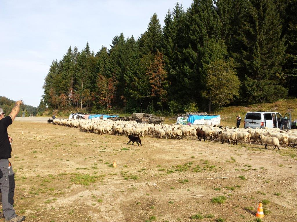 Die Schafherde mit dazugehörendem Hund