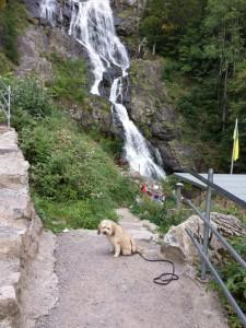 Boncuk vor dem Wasserfall in Todtnau