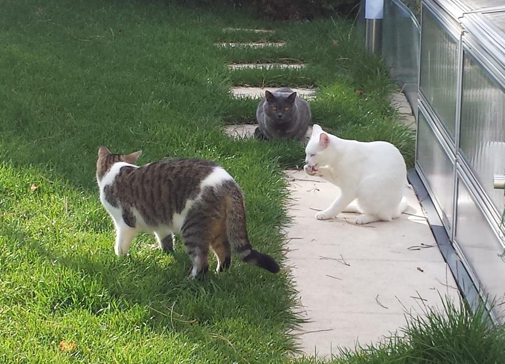 Finn, Mary & Prince im Garten