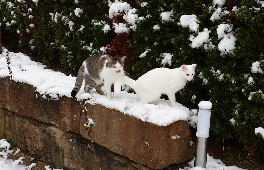 Finn & Prince im Schnee
