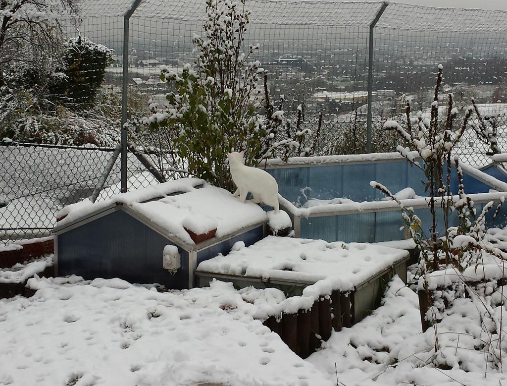 Prince im Schnee