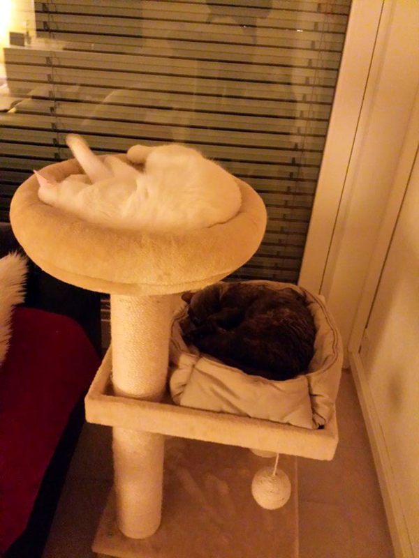 Mary & Prince auf dem Katzenbaum