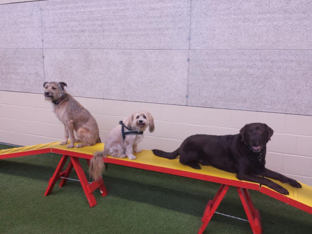 Boncuk in der Sporthunde-Gruppe des TbB