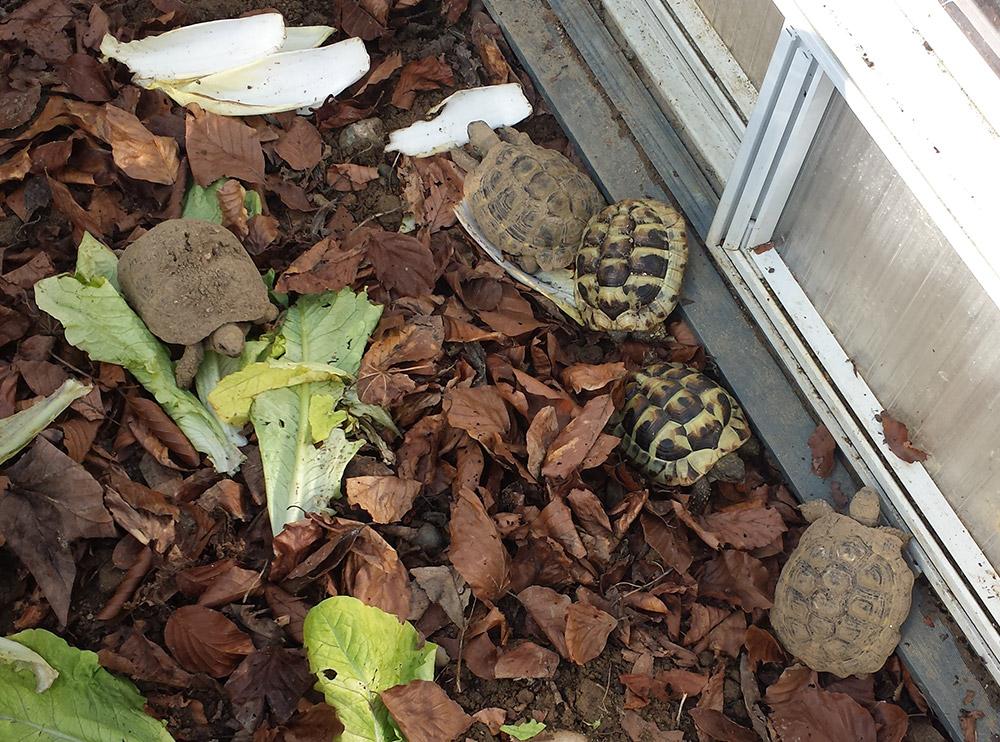 2 Terrarien-Schildkröten bei den Teenies