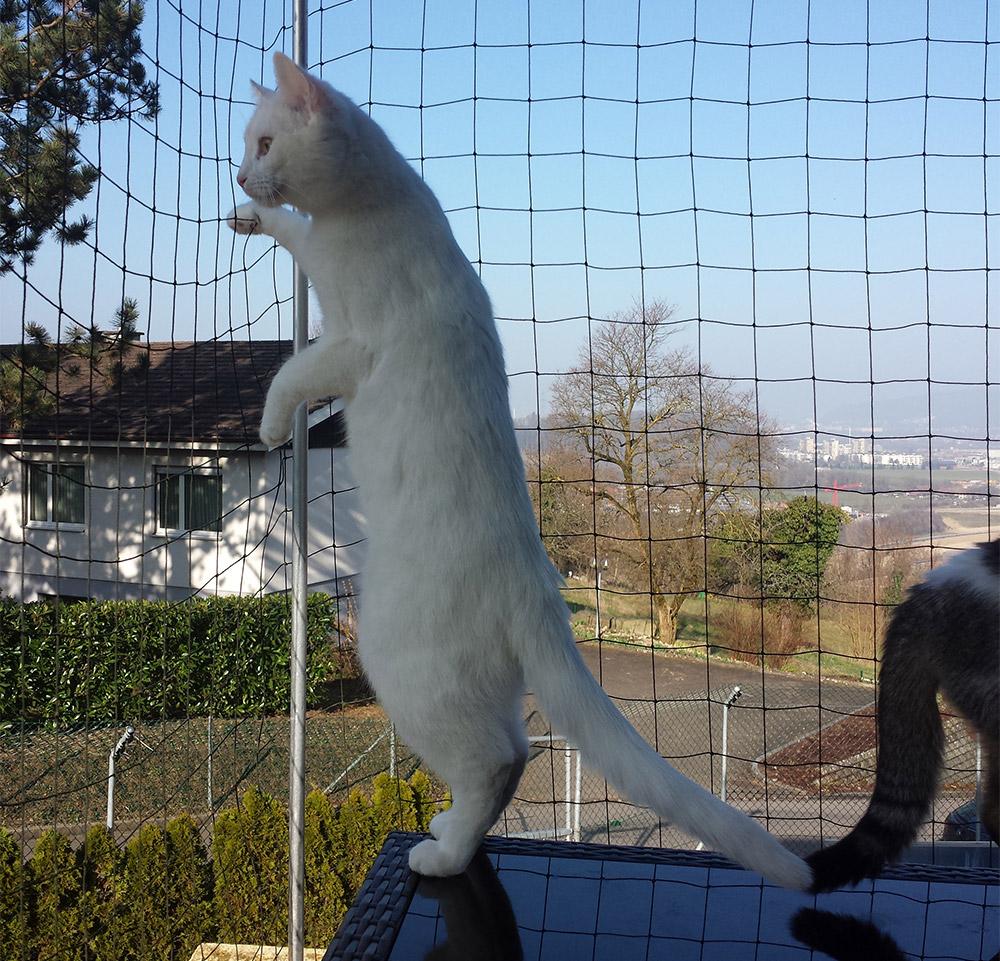 Prince auf dem Balkon