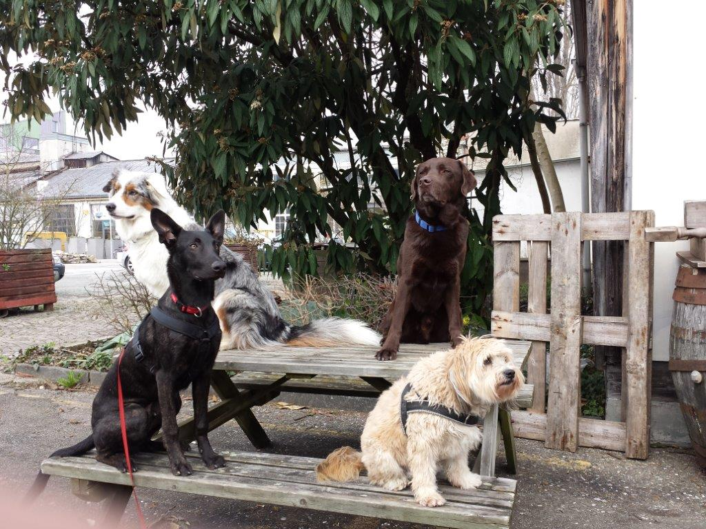 TbB-Samstag-Sporthunde-Gruppe