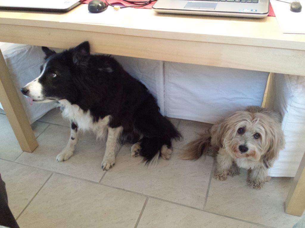 Cisco & Boncuk unterm Tisch