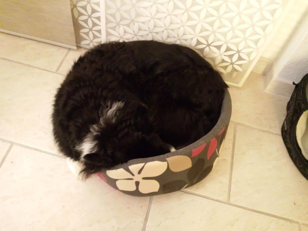 Cisco im viel zu kleinen Bett