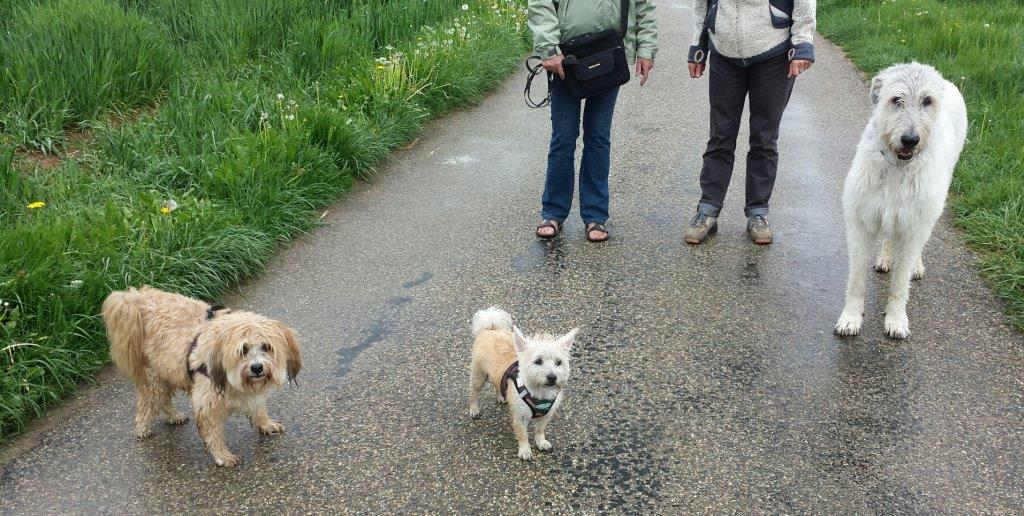 Boncuk, Timo & Helen