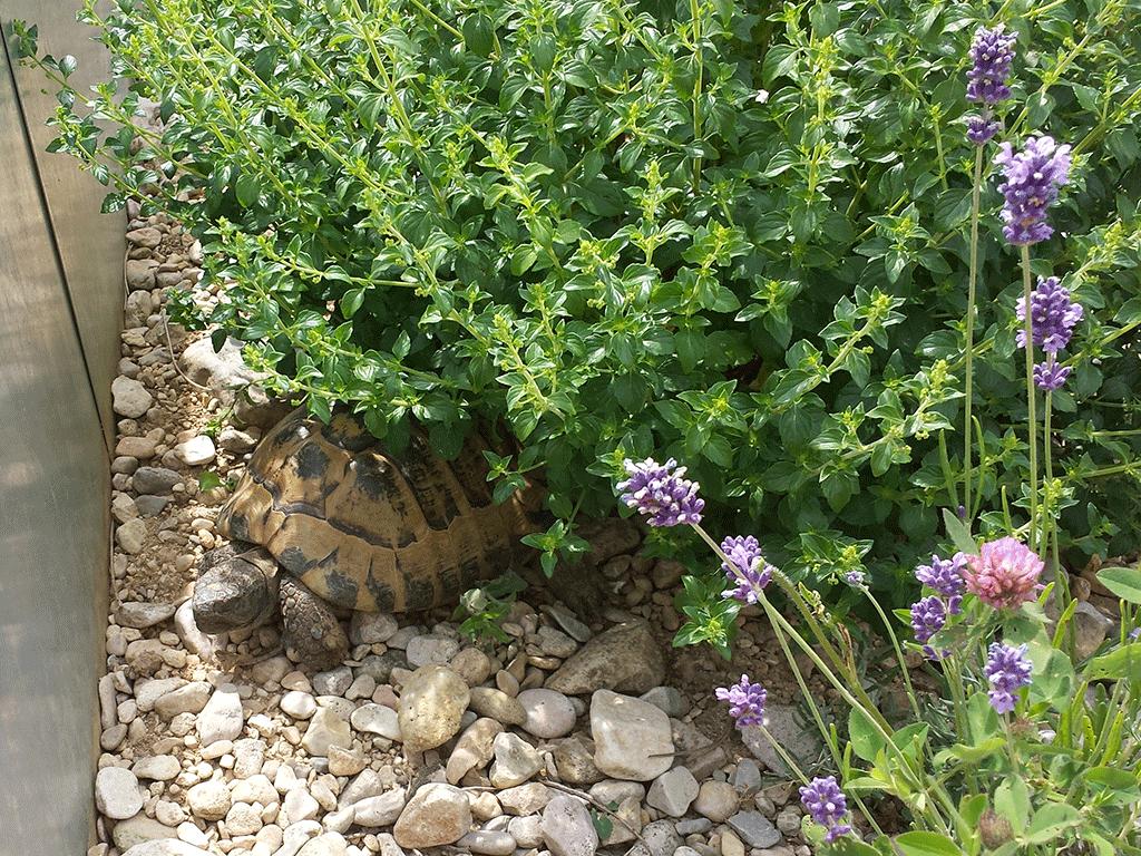 Die Schildkröten geniessen die Wärme