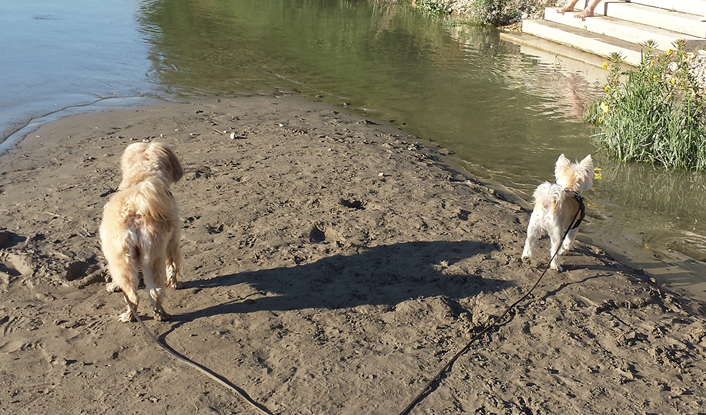 Am Rhein in Rheinfelden