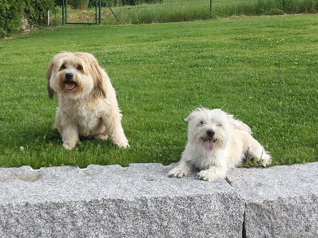 Bonsch und Timo