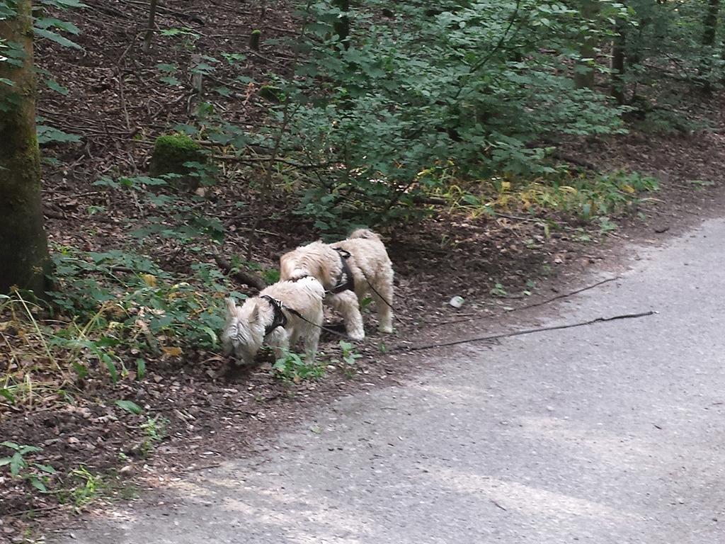 Auf einem der ersten Spaziergänge