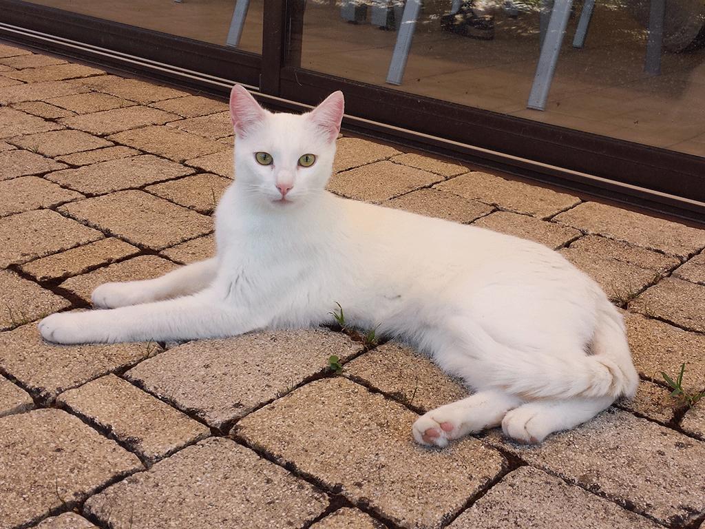 Prince im Schatten