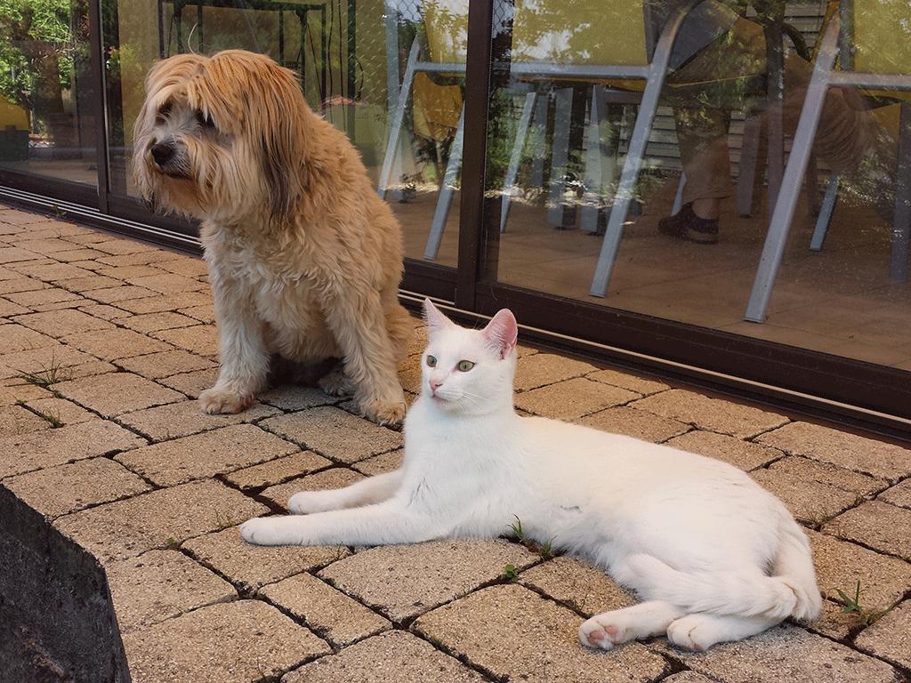 Bonsch & Prince im Schatten
