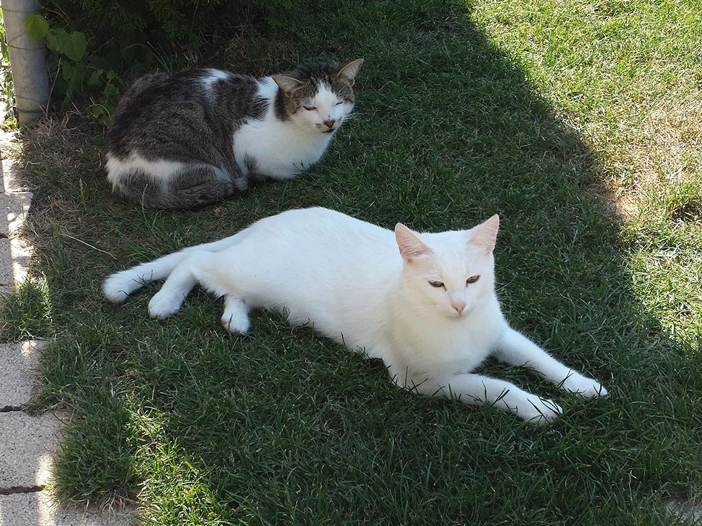 Finn & Prince im Schatten