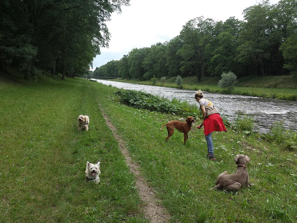 Bonsch, Timo, Ciba und Abby an der Wiese