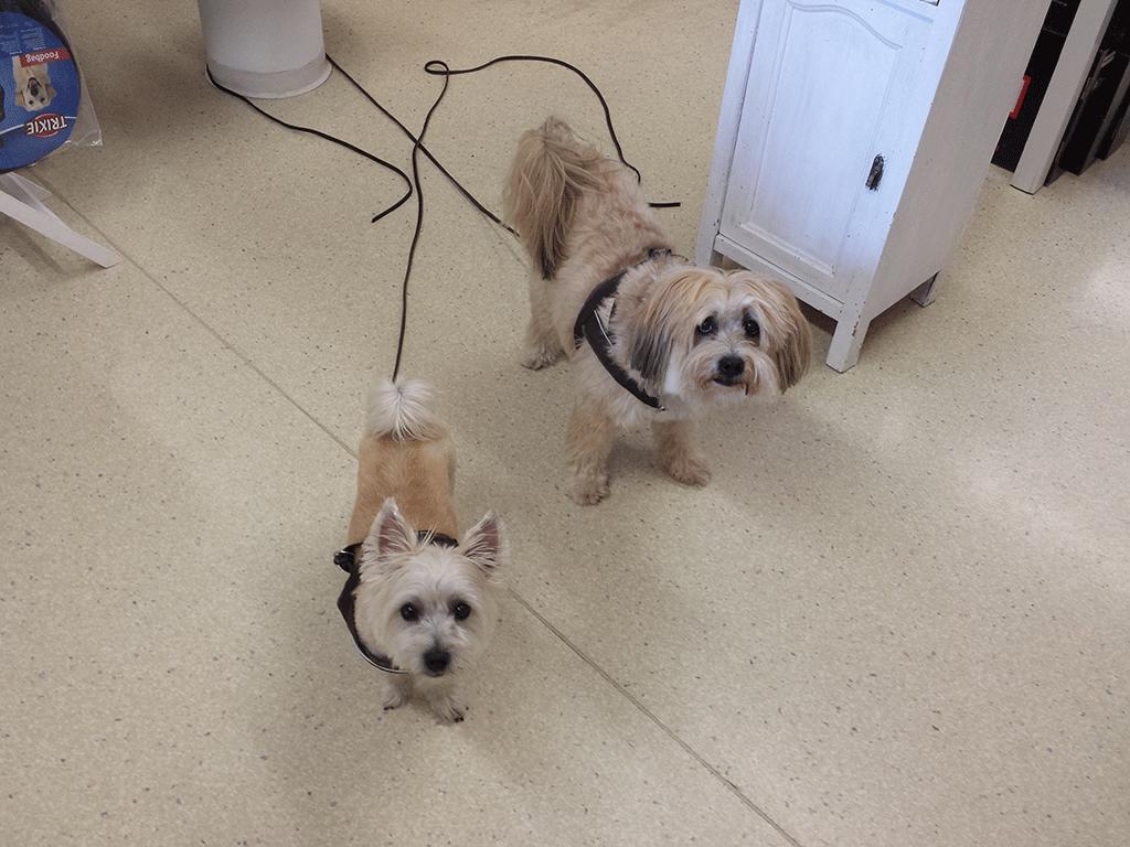 Nach dem Hunde-Salon