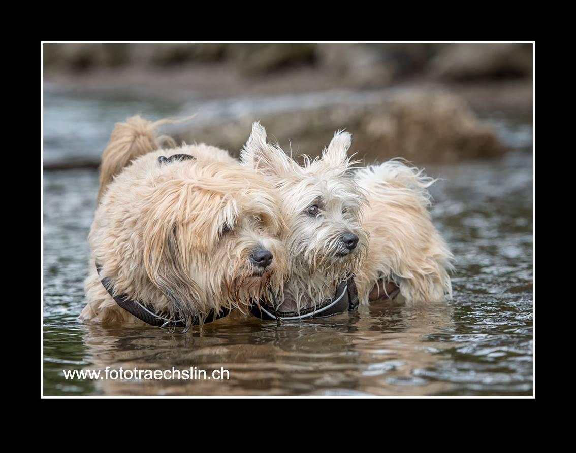 Timo & Boncuk - Foto www.hunde-fotoshooting.ch