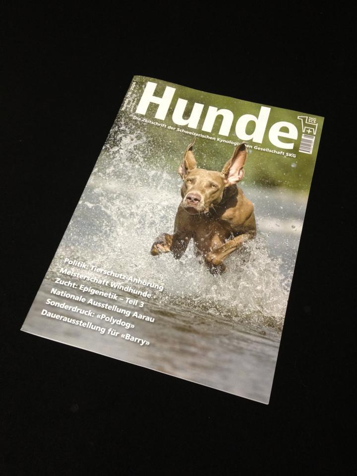 """Zeitschrift """"Hunde"""" der SKG - Bild von www.hunde-fotoshooting.ch"""