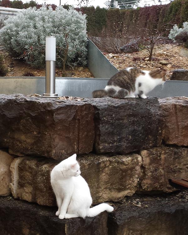 Prince & Finn im Garten