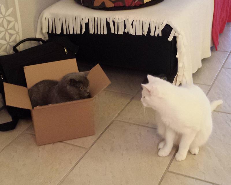 Mary in der Box, Prince ist sehr interessiert ...