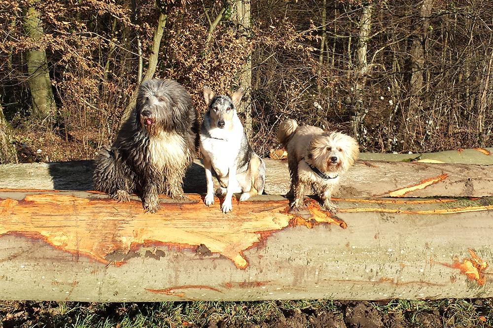Neela, Cassy & Bonsch