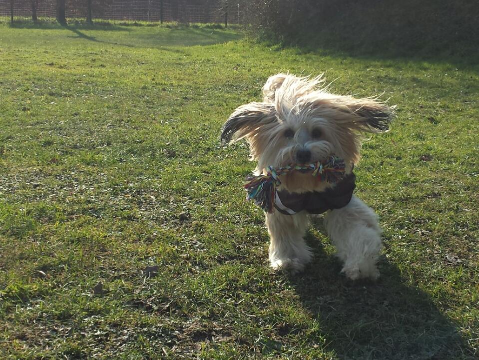 Sporthund Bonsch