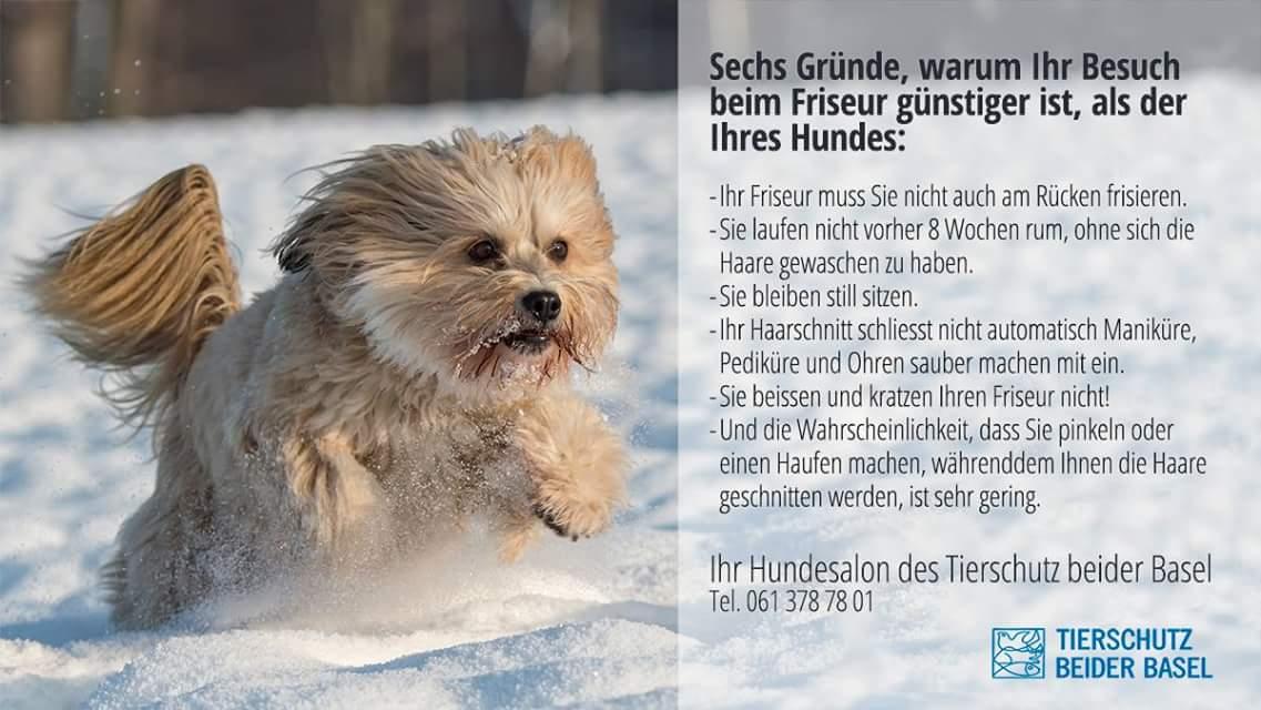 Hundesalon des Tierschutz beider Basel