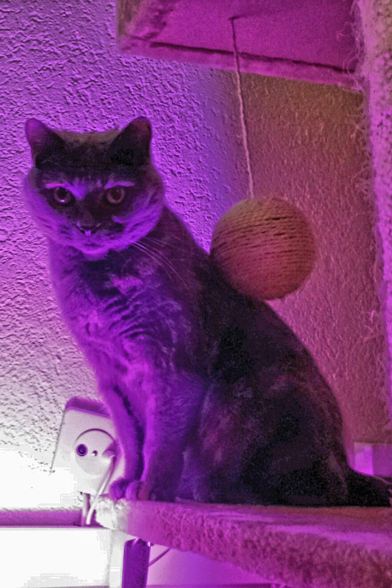 Mary im violetten Licht