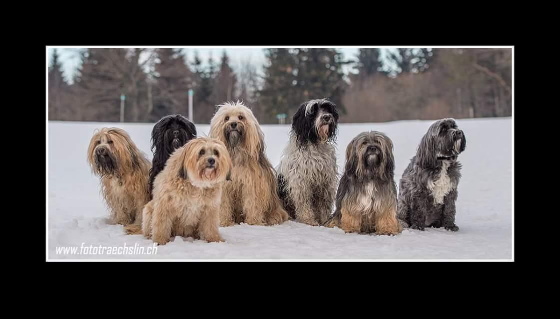 Gruppenbild mit Nayak, Kya-la, Bonsch, La-kyi-mo, Jämbhi, Oriad, Penny (Inouk fehlt)