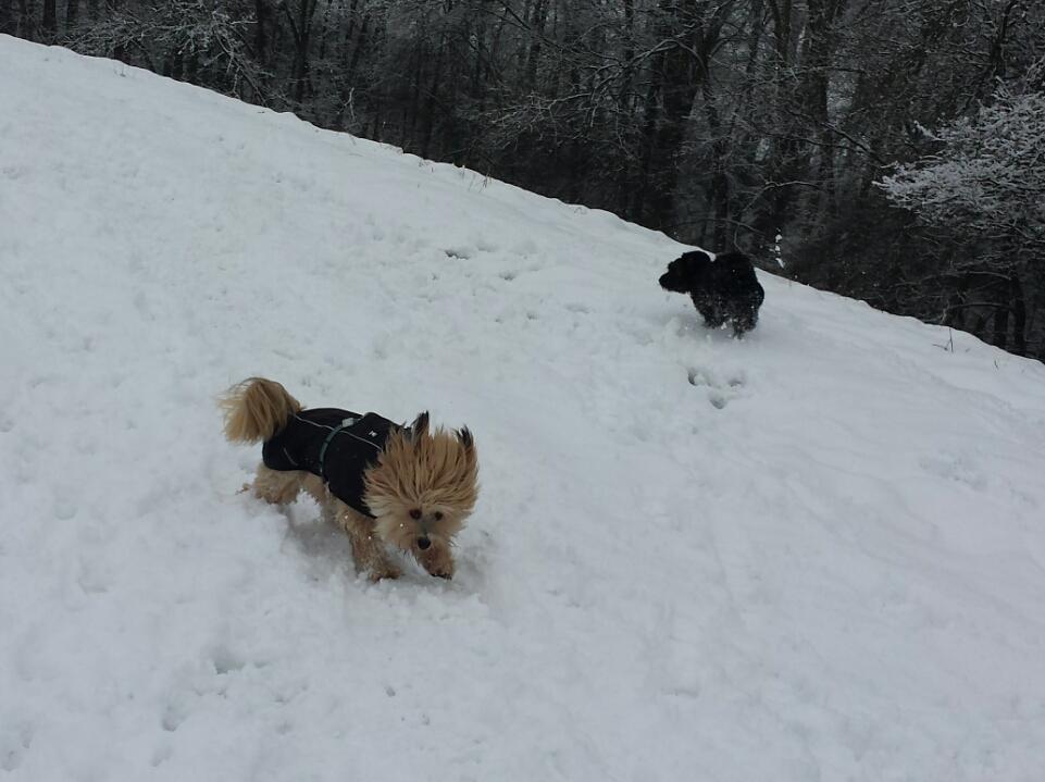 Schnee-Spaziergang in Ammel