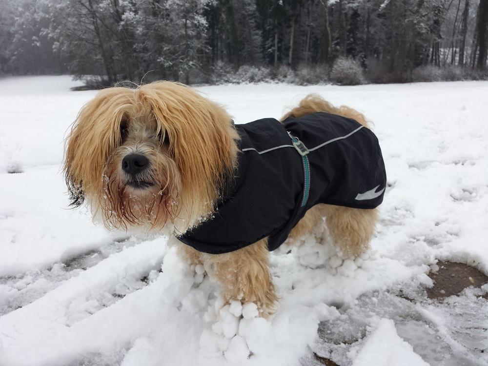 Schneefüsse in Ammel