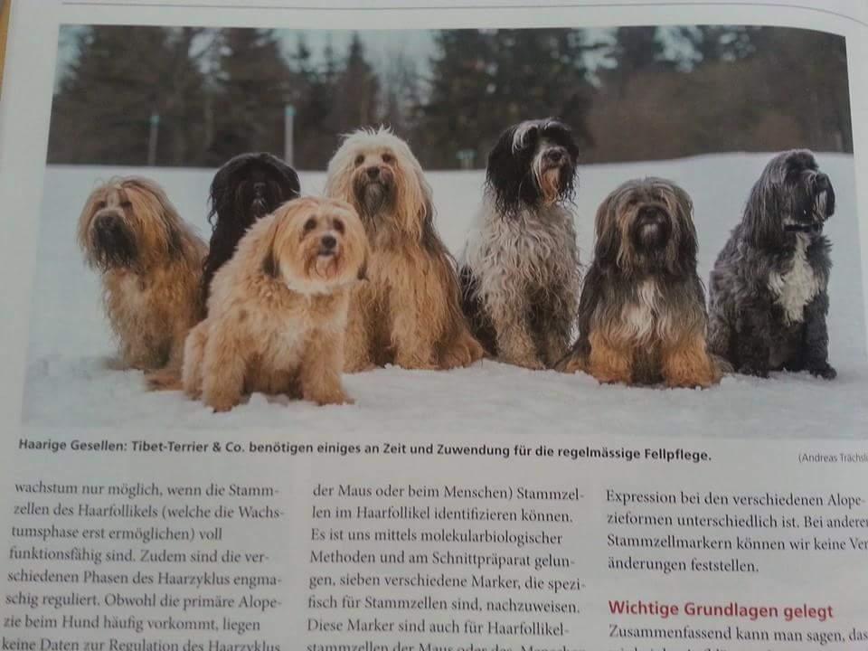 """Artikel im """"Hunde"""""""